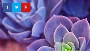 Monarch Best Social Share and Follow WordPress plugin