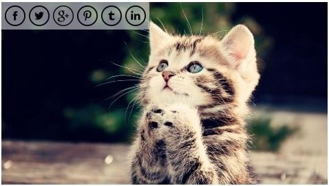 Image Sharing WordPress plugins